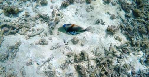 fish4a